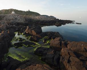 Sweden, Skane, Kullaberg, Coastal rocks and algaeの写真素材 [FYI02856040]