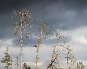Sweden, Sodermanland, Tyresta national park, Bare trees under cloudy skyの写真素材 [FYI02856061]