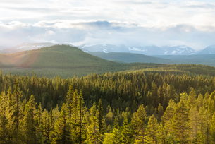 Sweden, Harjedalen, Storsjo, Scenic view of pine forest with mountains in backgroundの写真素材 [FYI02856125]