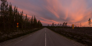 Forest road at sunset in Vasterbotten, Swedenの写真素材 [FYI02856184]