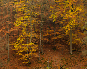 Sweden, Skane, Soderasens National Park, Trees on hillの写真素材 [FYI02856221]