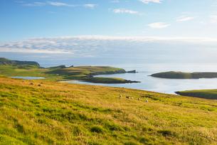Coastal landscape in Shetland, Scotlandの写真素材 [FYI02856236]