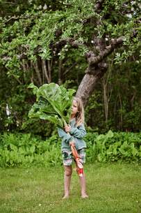 Sweden, Sodermanland, Girl (4-5) standing on grass and holding large rhubarb leavesの写真素材 [FYI02856269]