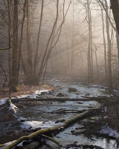 Forest during winter in Skane, Swedenの写真素材 [FYI02856273]