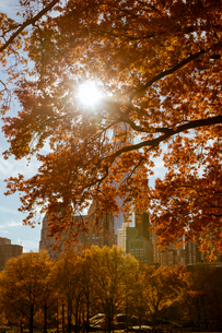 Sunbeam through an autumn tree in Central Park, New York Cityの写真素材 [FYI02856284]