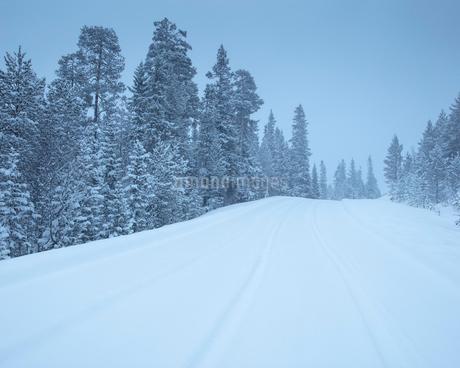 Rural road during winter in Fulufjallet National Park, Swedenの写真素材 [FYI02856320]