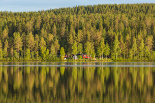 Forest by a river in Vasterbotten, Swedenの写真素材 [FYI02856322]