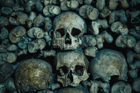 Human skulls in catacomb in Paris, Franceの写真素材 [FYI02856455]
