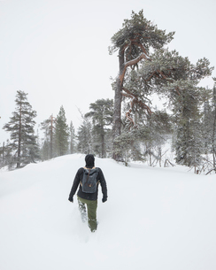 Man walking in snow in Fulufjallet National Park, Swedenの写真素材 [FYI02856655]