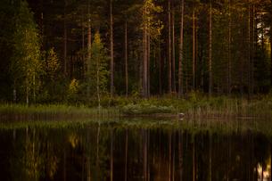 Forest by river in Vasterbotten, Swedenの写真素材 [FYI02856673]