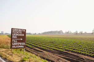 Sign and a field of crops in Lorby, Swedenの写真素材 [FYI02856730]