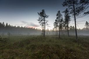 Misty field by forest in Vasterbotten, Swedenの写真素材 [FYI02856757]