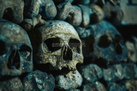 Human skulls in catacomb in Paris, Franceの写真素材 [FYI02856762]