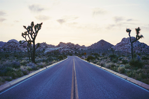 Highway through Joshua Tree National Park, USAの写真素材 [FYI02856782]