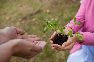 Girl giving seedling to cropped cupped hands of motherの写真素材 [FYI02857352]