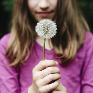 A ten year old girl holding a dandelion clock seedhead.の写真素材 [FYI02857575]