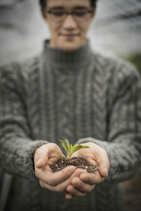 A person holding a small plant seedling in his cupped hands.の写真素材 [FYI02857711]