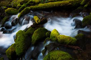 Barnes Creek with water flowing over mossy rocksの写真素材 [FYI02857823]