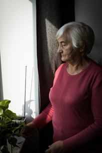 Senior woman looking at plantの写真素材 [FYI02857906]