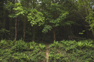 View of beautiful trees in forestの写真素材 [FYI02857979]