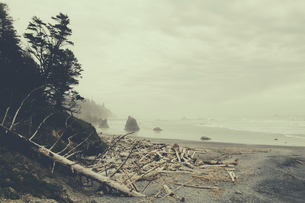 View of coastline from Ruby Beach, piles of driftwood in foreground, Olympic National Park, WA, USAの写真素材 [FYI02858175]