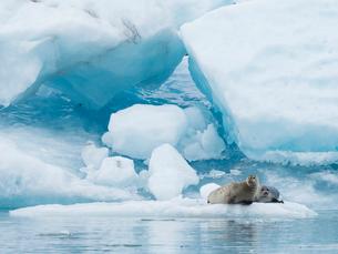 Glacial lake on the edge of Vatnajokull National Park. at the head of the Breidamerkurjokull glacierの写真素材 [FYI02858248]