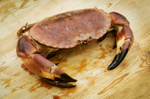 Close up of a fresh crab.の写真素材 [FYI02858260]