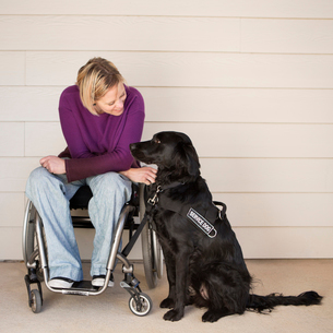 A mature woman wheelchair user stroking her black Labrador service dog and making eye contact with tの写真素材 [FYI02858294]