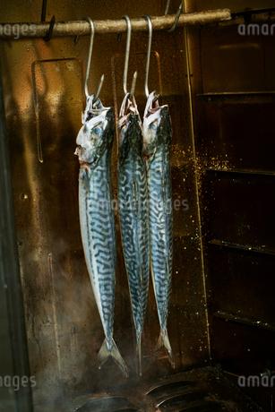 Three mackerel hanging in a fish smoker.の写真素材 [FYI02858385]