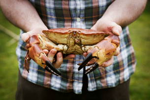 Close up of a chef holding a fresh crab in his hands.の写真素材 [FYI02858401]
