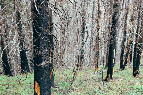 Recovering forest after extensive fire damage, near Wenatchee National Forest in Washington state.の写真素材 [FYI02858413]