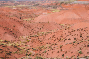 Elevated view of the Painted Desert rock formations in the Petrified Forest National Parkの写真素材 [FYI02858425]