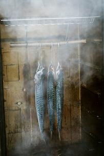 Three mackerel hanging in a fish smoker.の写真素材 [FYI02858458]