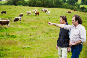 Two men and a herd of English Longhorn cattle in a pasture.の写真素材 [FYI02858565]