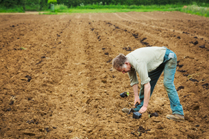 A man bending over planting a seedling in a field.の写真素材 [FYI02858610]