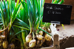 Organic onions being sold in a farm shop.の写真素材 [FYI02858614]
