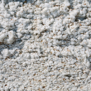 Close up of harvested cottonの写真素材 [FYI02858720]