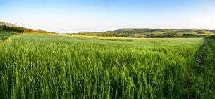 Rural landscape with view across fields of crops near Slapton, Devon.の写真素材 [FYI02858781]