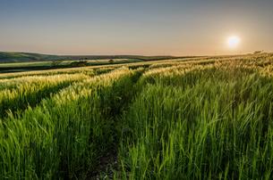 Rural landscape with view across fields of crops near Slapton, Devon at sunset.の写真素材 [FYI02858804]