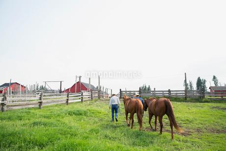 Ranchers leading horses in pastureの写真素材 [FYI02858923]