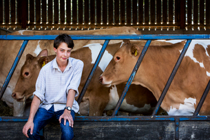 Young man sitting in a barn with Guernsey cows.の写真素材 [FYI02859033]