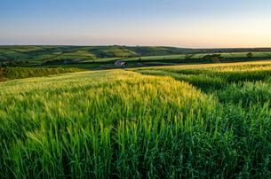 Rural landscape with view across fields of crops near Slapton, Devon at sunset.の写真素材 [FYI02859090]