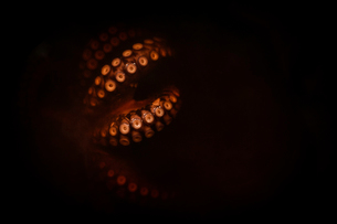 Close up of octopus tentacles lit up, glowing red on a black background.の写真素材 [FYI02859144]
