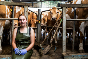 Young woman wearing apron standing in a milking shed with Guernsey cows.の写真素材 [FYI02859340]