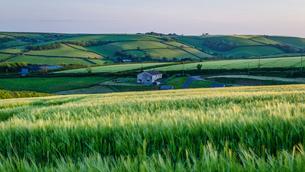 Rural landscape with view across fields of crops near Slapton, Devon at sunset.の写真素材 [FYI02859641]