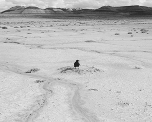 Raven in foreground, Petrified Forest National Parkの写真素材 [FYI02859731]