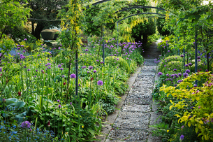 View along a garden path, flower beds with purple Allium and trees in the background.の写真素材 [FYI02859762]
