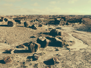 Fossilized trees at Petrified Forest National Park, Arizonaの写真素材 [FYI02859785]