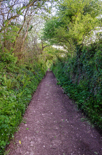 Rural tree-lined path near Slapton.の写真素材 [FYI02859815]