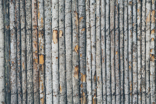 A fence made from tree trunksの写真素材 [FYI02859822]